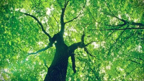 Sanepar participa de atividades para comemorar o Dia da Árvore
