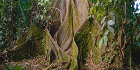 Consórcio Iberê tem programação para marcar o Dia da Árvore no Oeste de Santa Catarina