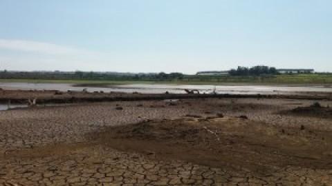 Seca no DF: sem água, agricultores têm perdas de até 90% na produção
