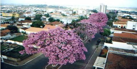 Comunidade da Platina, no Paraná, comemora início das obras da Sanepar